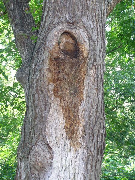 Identifying Tree Diseases