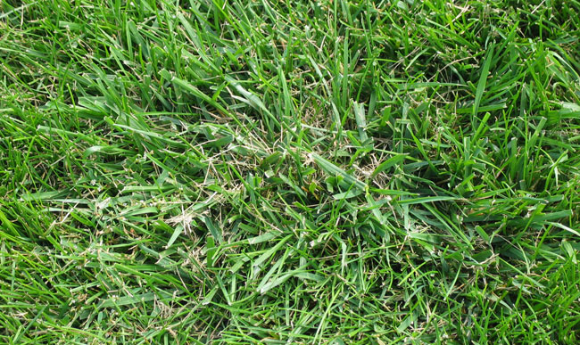 Control Options For Common Minnesota Lawn And Landscape